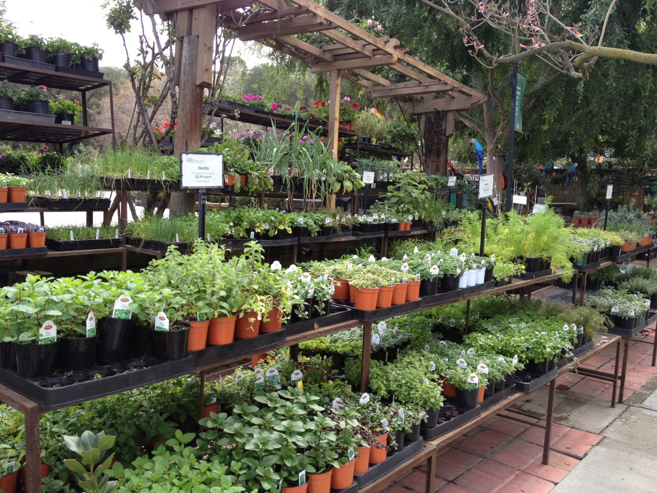 The Herb Section At Sperling Nursery