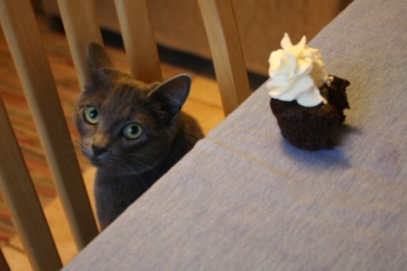 cupcakes with kitten