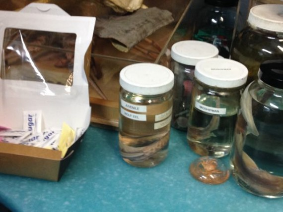 santa monica pier aquarium snacks