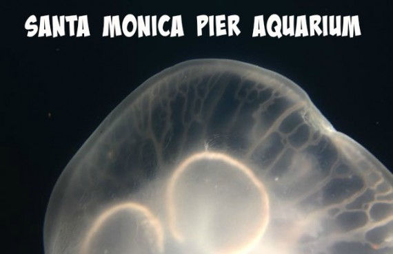 santa monica pier aquarium pinterest