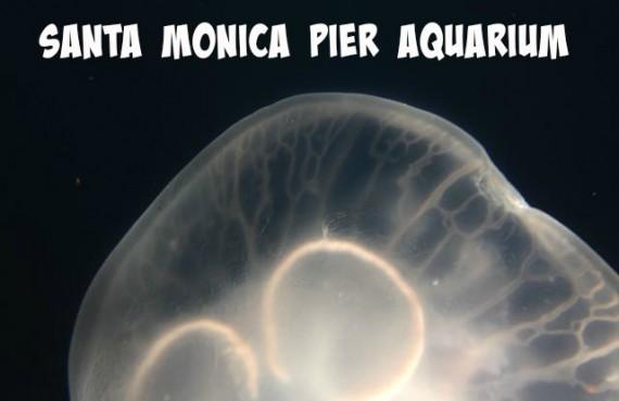 santa monica pier aquarium pinterest