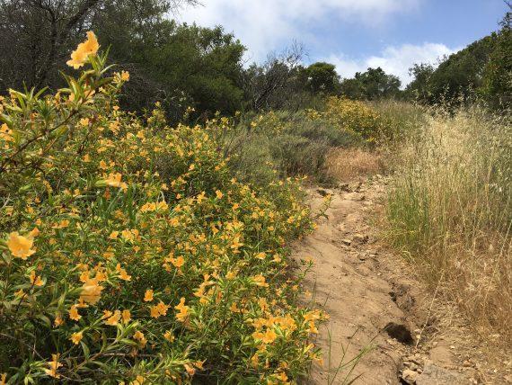 Wildflowers on trail