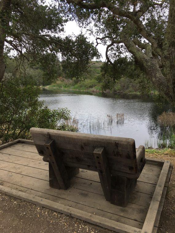 Bench by pond